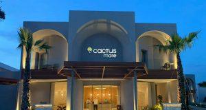 cactus mare